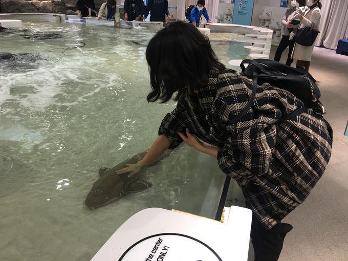 サメ肌実感!触れて魚たちを知ってみよう!