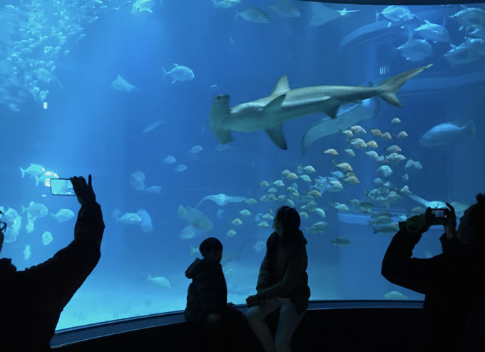 ジンベエザメは立ち泳ぎでエサを食べるって知ってた?