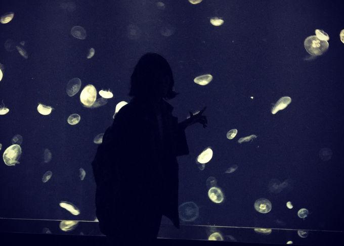 海の中の宇宙を体験!?「海月銀河」