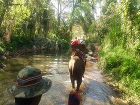 タイの世界遺産カオヤイ国立公園で象乗りトレッキング&タイ料理教室体験