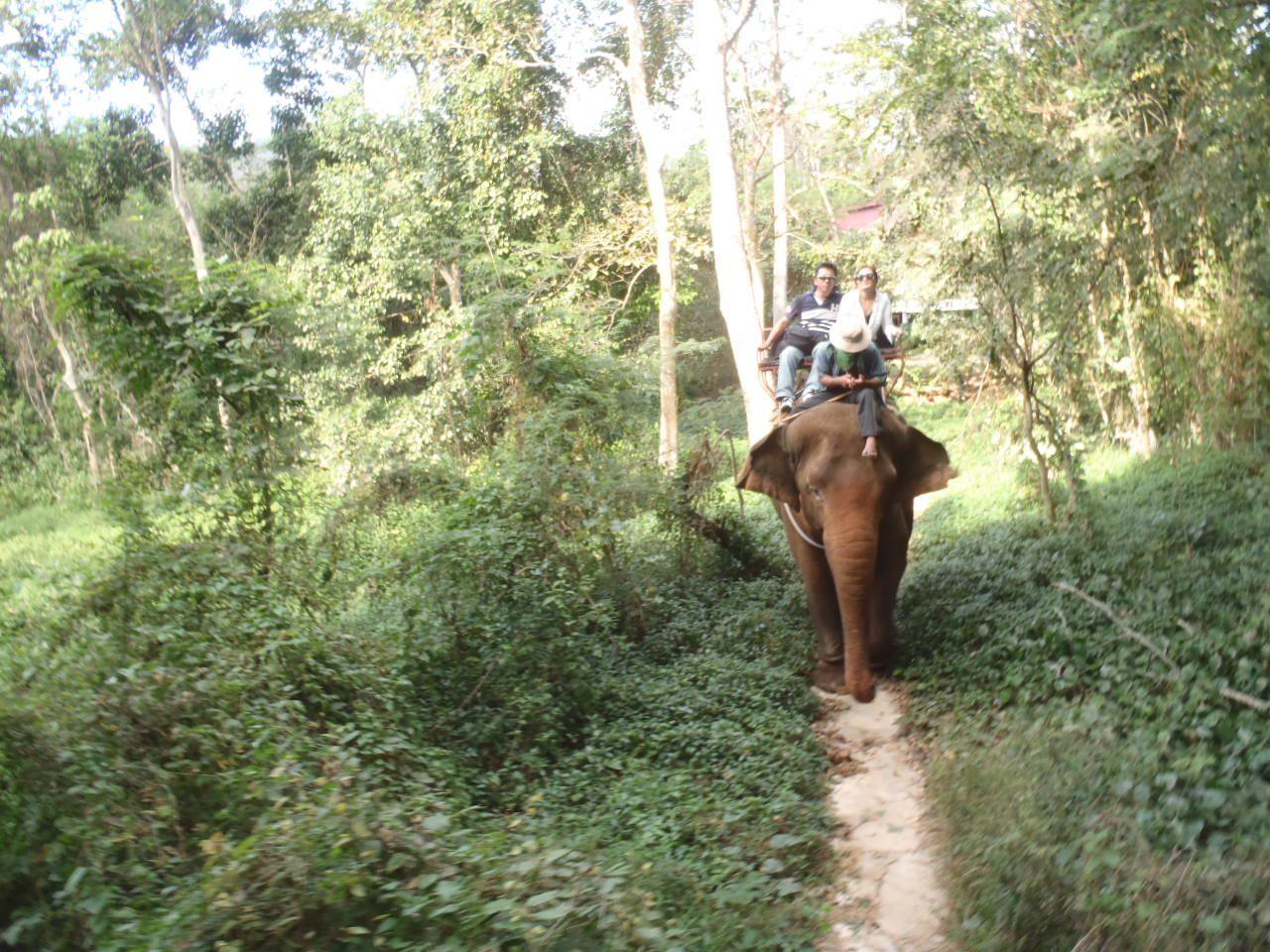 ジャングルの森の中、川をバシャバシャ、象乗りトレッキング
