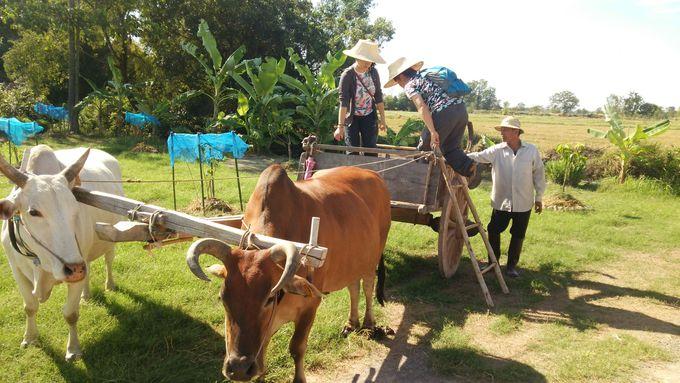 竹製帽子を被って牛車の試乗体験