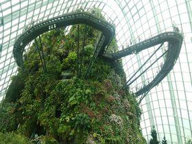 巨大な雲霧林の塔!シンガポール・クラウドフォレストが圧倒的!