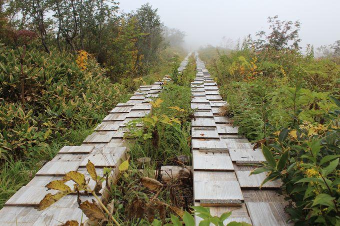 5.高山植物の楽園「弥陀ヶ原」のボードウォーク散策