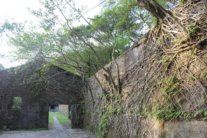 炭坑跡が自然に覆い隠されている菁桐煤鉱紀念公園