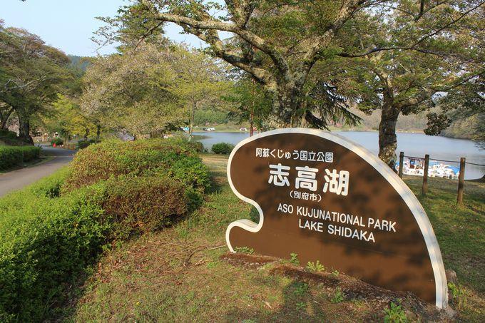 別府温泉を抱く鶴見岳麓に森の中の冒険施設が完成!