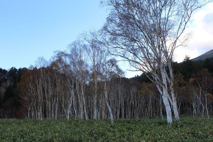 尾瀬植物研究見本園の散策がちょうど良い