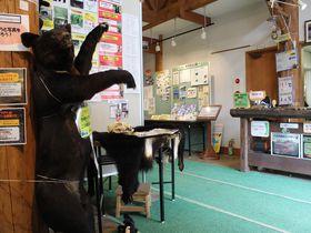 至仏山麓「尾瀬山の鼻ビジターセンター」は実物展示が見物!