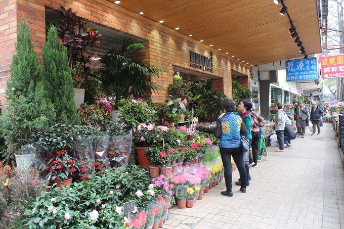 花墟道には歩道も占領するほどに広がる鉢植えが!