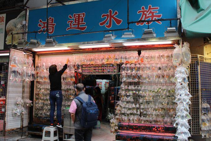 金魚街では金魚も川藻もビニール展示販売!
