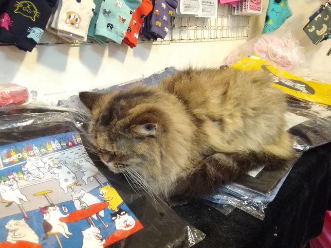 商品の上にも、調理道具中にも、猫・ネコ・ねこ!