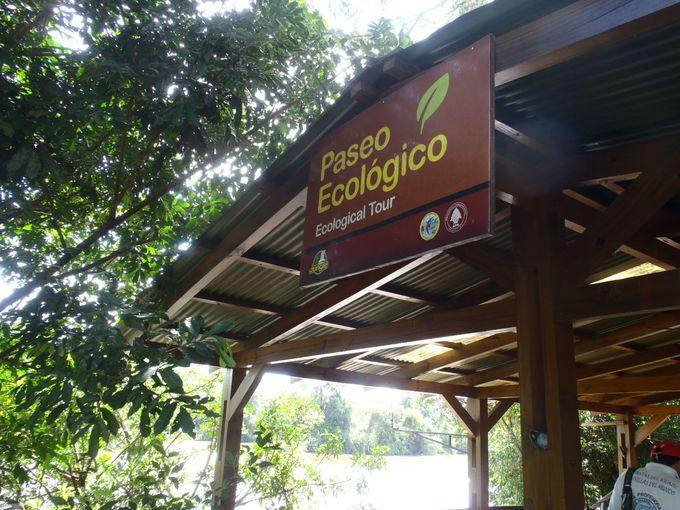 ジャングルを行くエコツアー