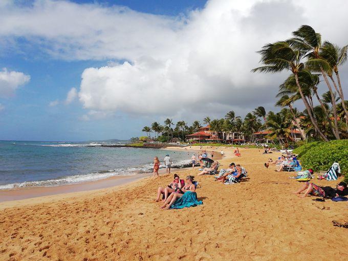 すぐ近くにはアザラシも昼寝する程のんびりできるビーチも!