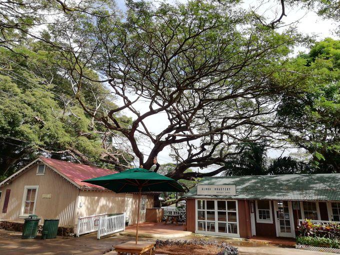 生命力溢れる巨木に包まれた街「コロア」