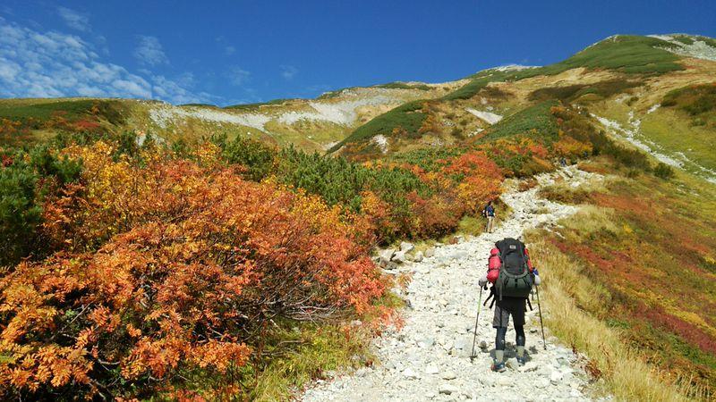 紅葉に囲まれた立山「雷鳥沢」周辺のトレッキングコース3選