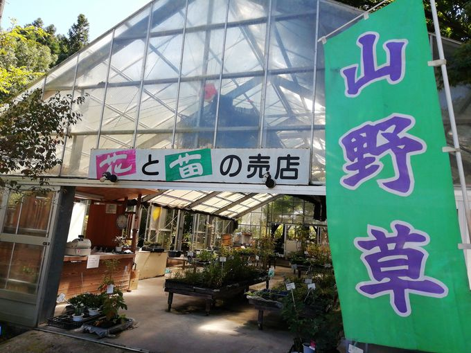 4.くじゅう野の花の郷