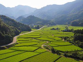 日本の原風景!大分「田染荘」の見どころは田んぼだけじゃない