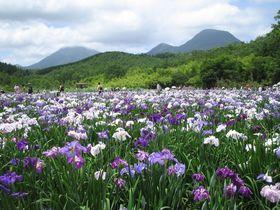 豊かな自然と温泉が嬉しい「九州オルレ別府コース」