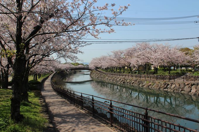 桜の時期は大賑わい!「平和市民公園」