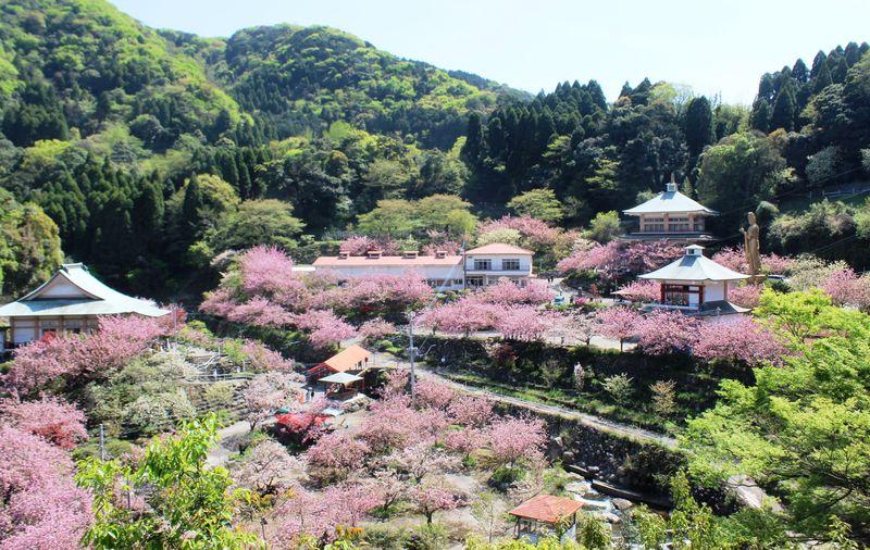 九州のおすすめ桜スポット10選 人気の名所でお花見しよう!