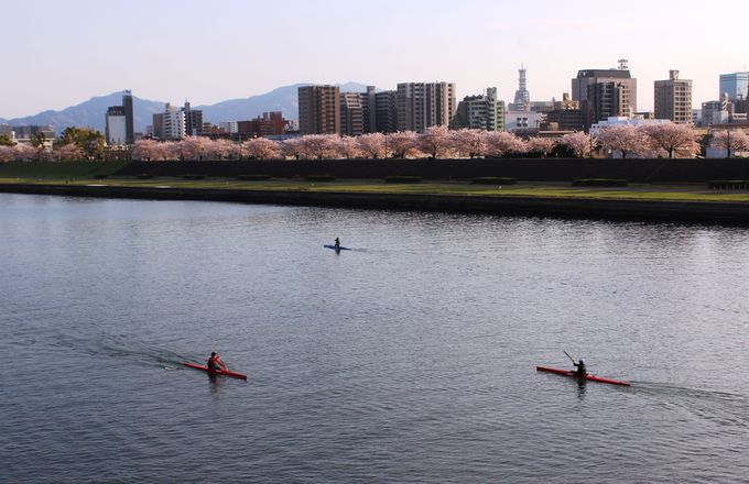 桜舞い散る「大分川河川敷」は贅沢なウォーキングコース