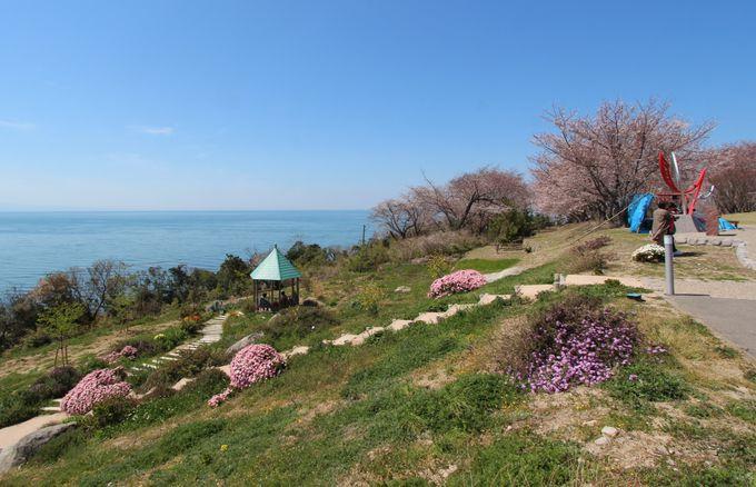 「粟嶋公園」の桜並木愛でつつ、良縁を結ぶ粟嶋社にお参りしよう
