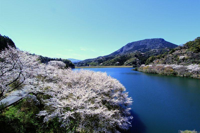 桜だけじゃない!春のお花見ドライブは大分・国東半島へ