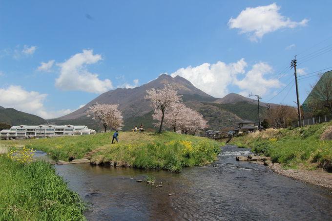 小川を渡って金鱗湖へ。のどかな田園風景を楽しもう