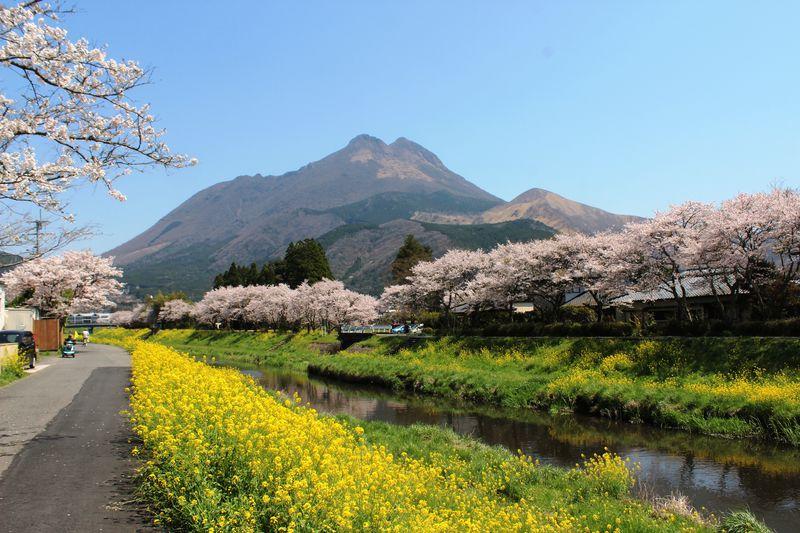 湯布院の桜はここで観たい!春うららかなお散歩コース