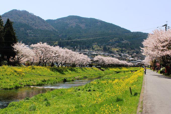 御幸橋から城橋へと続く道は、最も湯布院らしい春景色