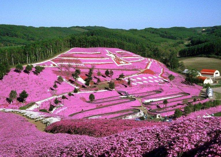 一人の農家の一株から始まった「ひがしもこと芝桜公園」