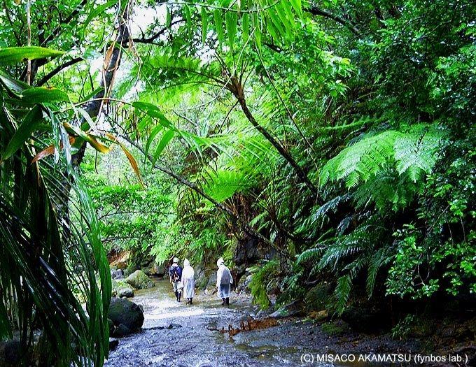 大岩をよじ登る本格「リバートレッキング」で森林浴