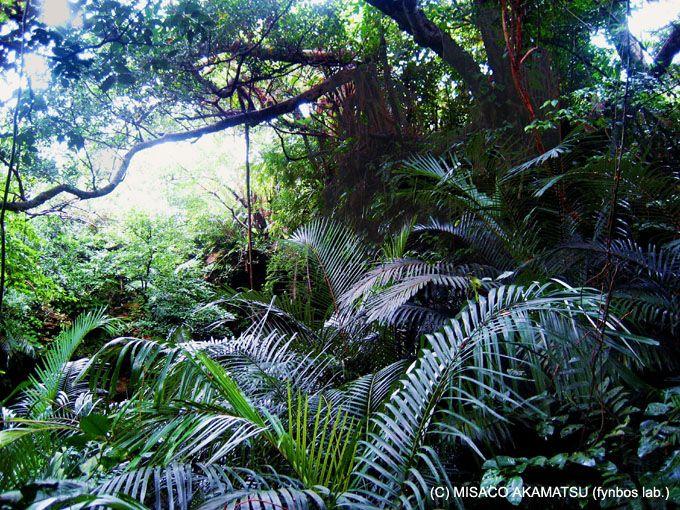 絶対に行くべき! 亜熱帯の「ジャングルトレッキング」
