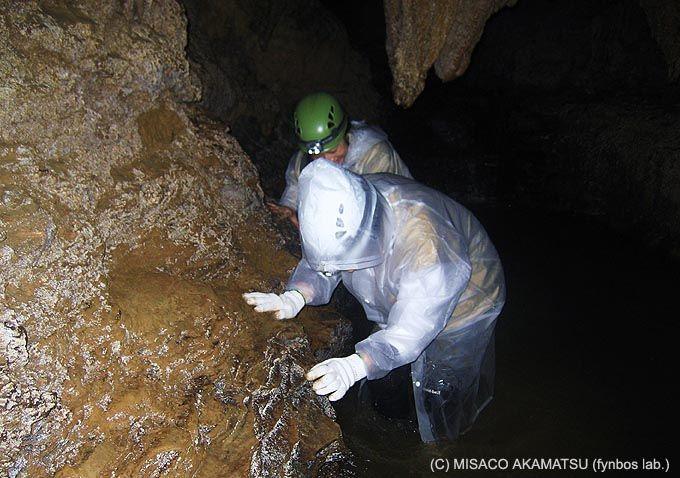 未開の洞窟をくぐり抜ける「ケイビング」は究極の空間