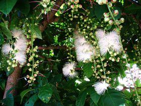 西表島で絶対に見たい!亜熱帯雨林の珍しい植物たち