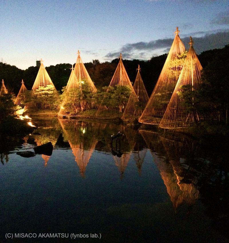 紅葉と雪吊りがライトアップ!名古屋「白鳥庭園」の幻想的風景