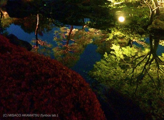 ライトアップされた木々と水鏡は、どこを切り取っても絵になる美しさ