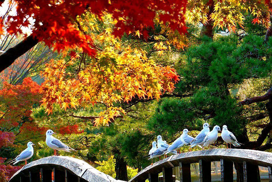 陽の光を浴びた紅葉は何色何層にも彩られた眩い景色