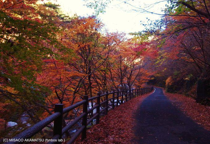 秋を感じるハイキングは紅葉シーズンに行くのがオススメ!