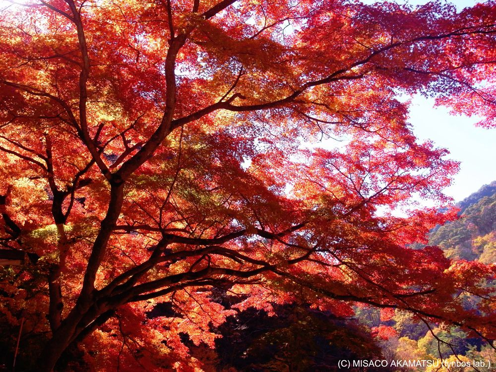 山梨「昇仙峡」は燃ゆる紅葉と滝のライトアップが美しい絶景名所