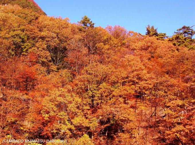 赤から朱色、黄色まで、名勝に相応しい風趣に富んだ紅葉