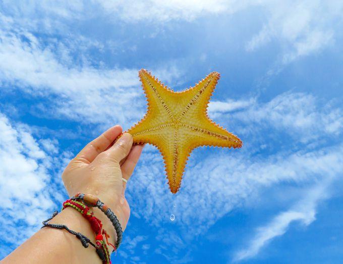 海の生活を楽しんで