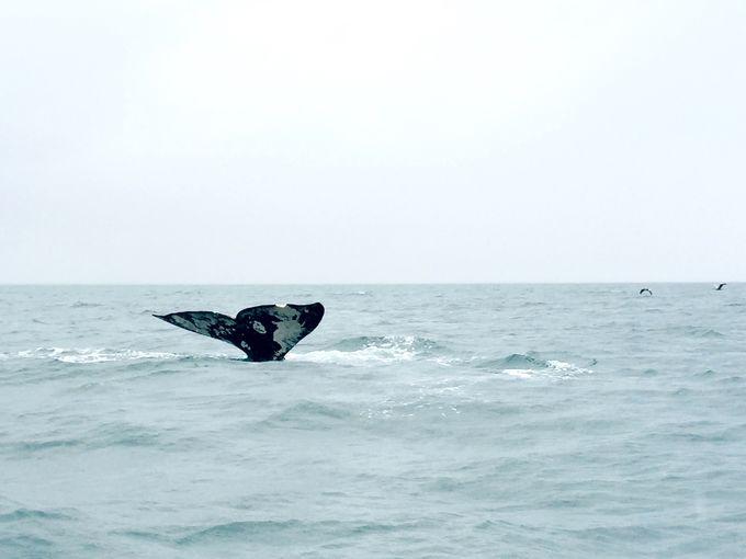 クジラに触れる