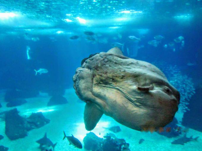 ヨーロッパ最大規模!世界中から注目を集めるリスボン水族館