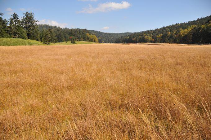 草もみじ広がる大江湿原