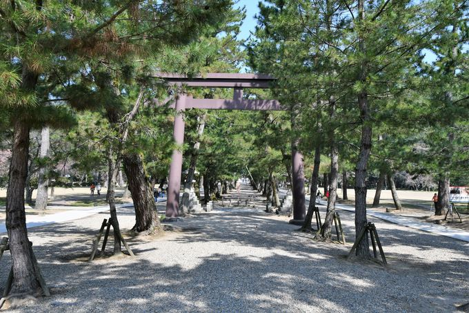 三の鳥居、松の参道の鳥居(中の鳥居)