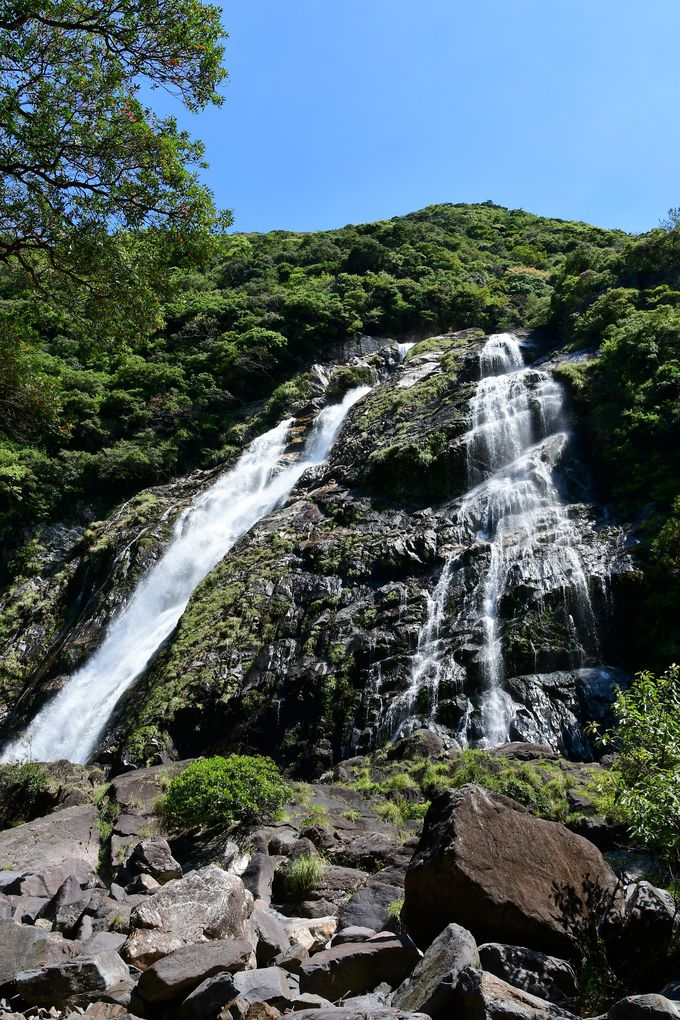 中間ガジュマルと大川の滝