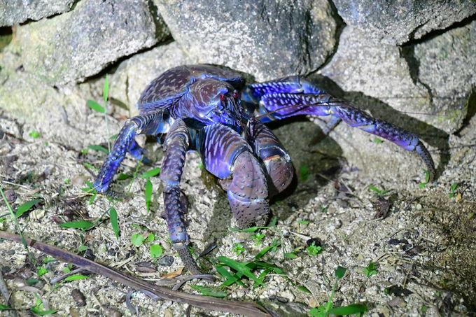 石崎半島で見られる生き物