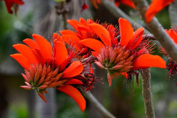 石垣島の花と蝶