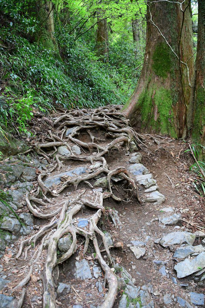 岩屋大師と琵琶滝